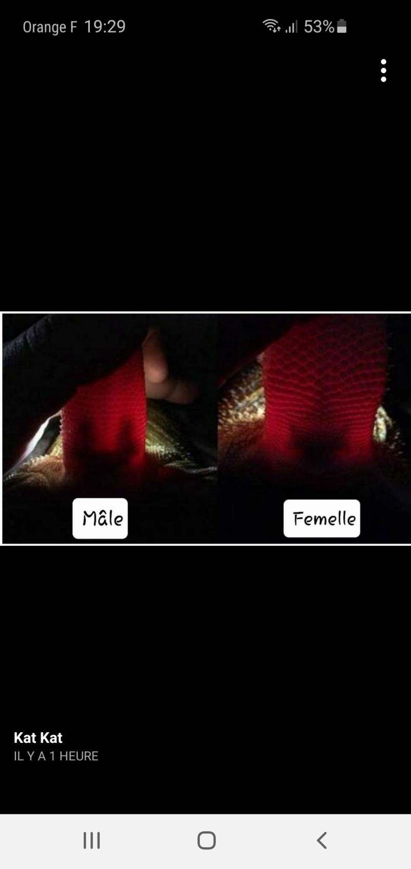 sexage pogona Screen36