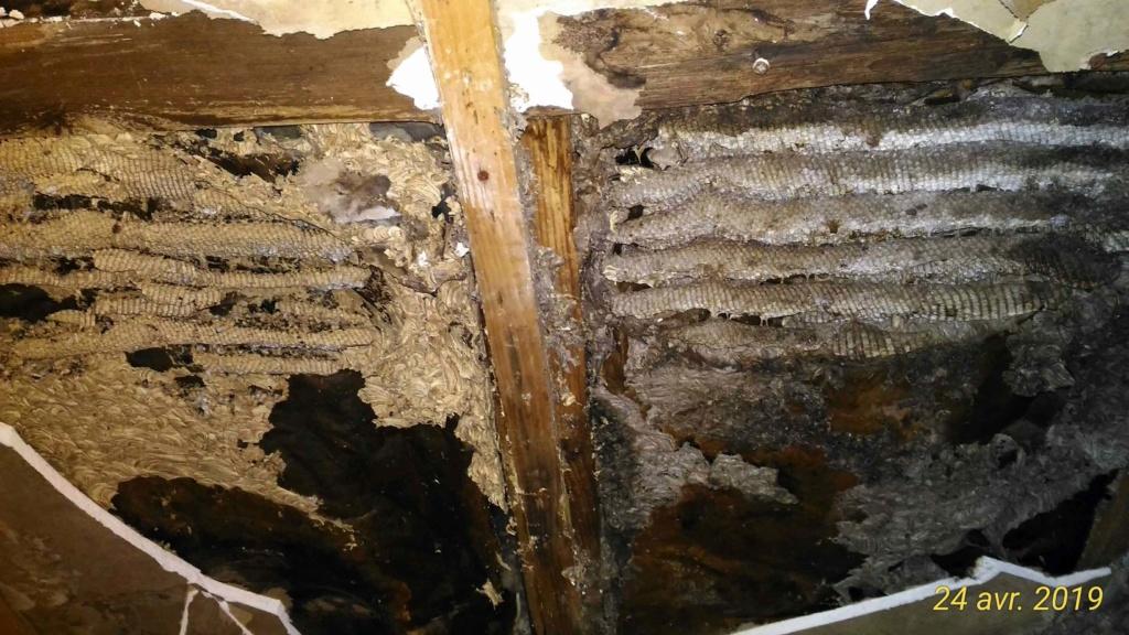 Gros dégâts sur rampant en lambris chambre à coucher _1_nid10
