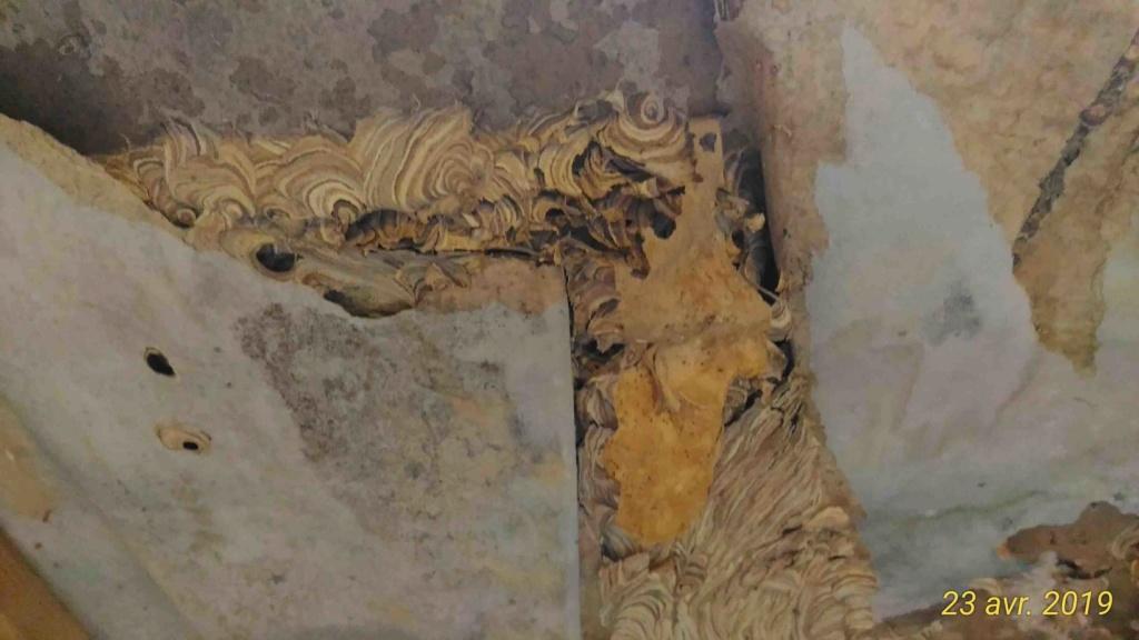 Gros dégâts sur rampant en lambris chambre à coucher _1_tra12