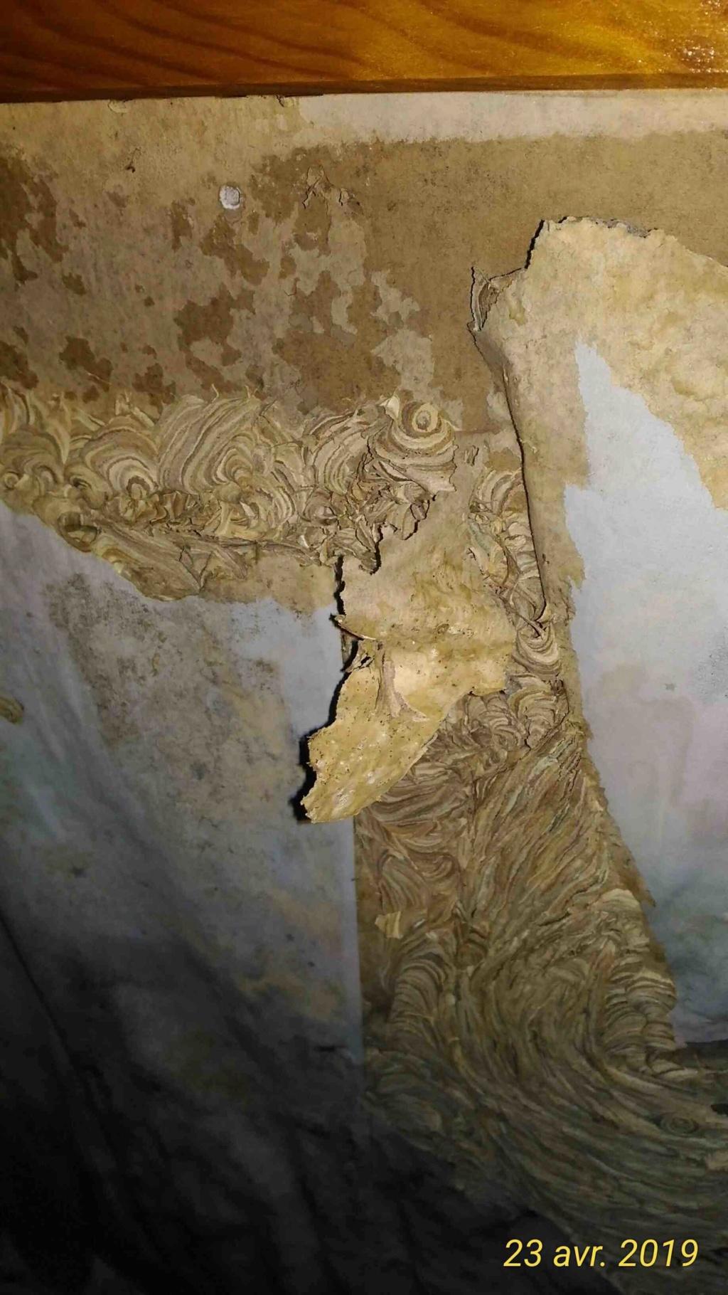 Gros dégâts sur rampant en lambris chambre à coucher _2_tra12