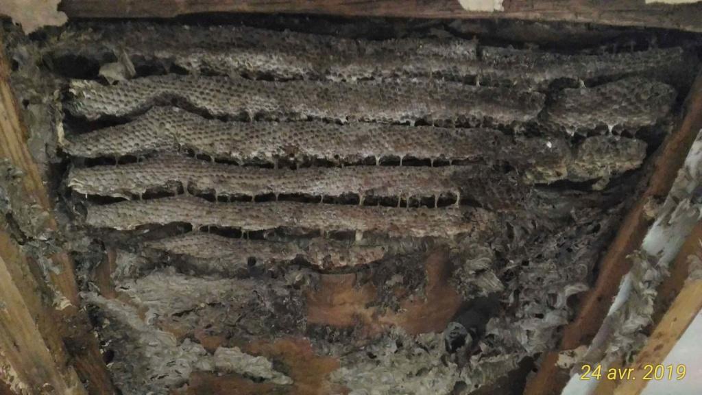 Gros dégâts sur rampant en lambris chambre à coucher _4_nid10
