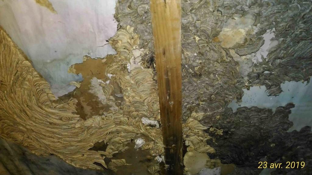 Gros dégâts sur rampant en lambris chambre à coucher _4_tra11