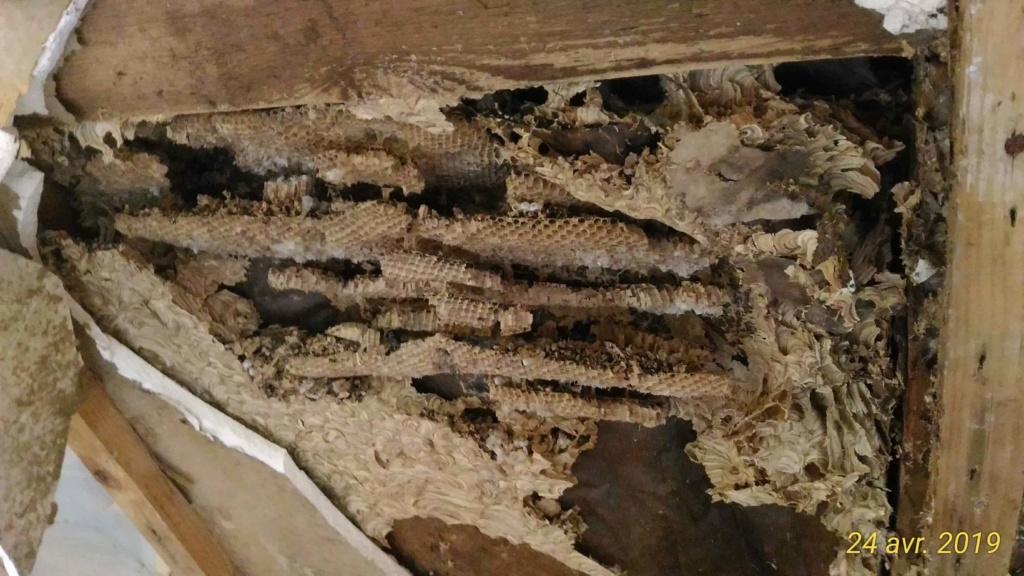Gros dégâts sur rampant en lambris chambre à coucher _5_nid10