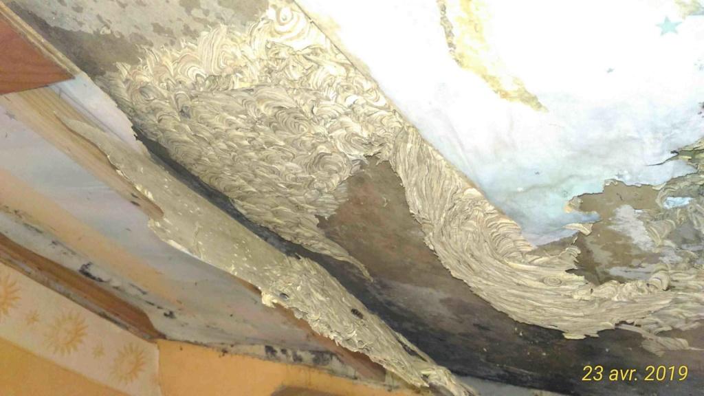 Gros dégâts sur rampant en lambris chambre à coucher _6_tra10