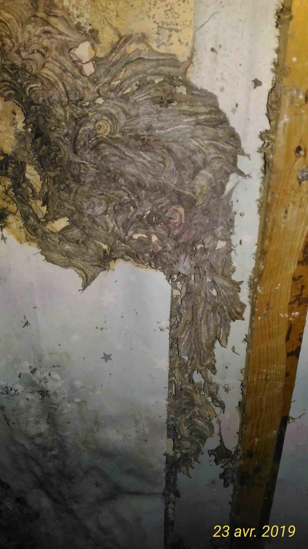 Gros dégâts sur rampant en lambris chambre à coucher _7_tra10