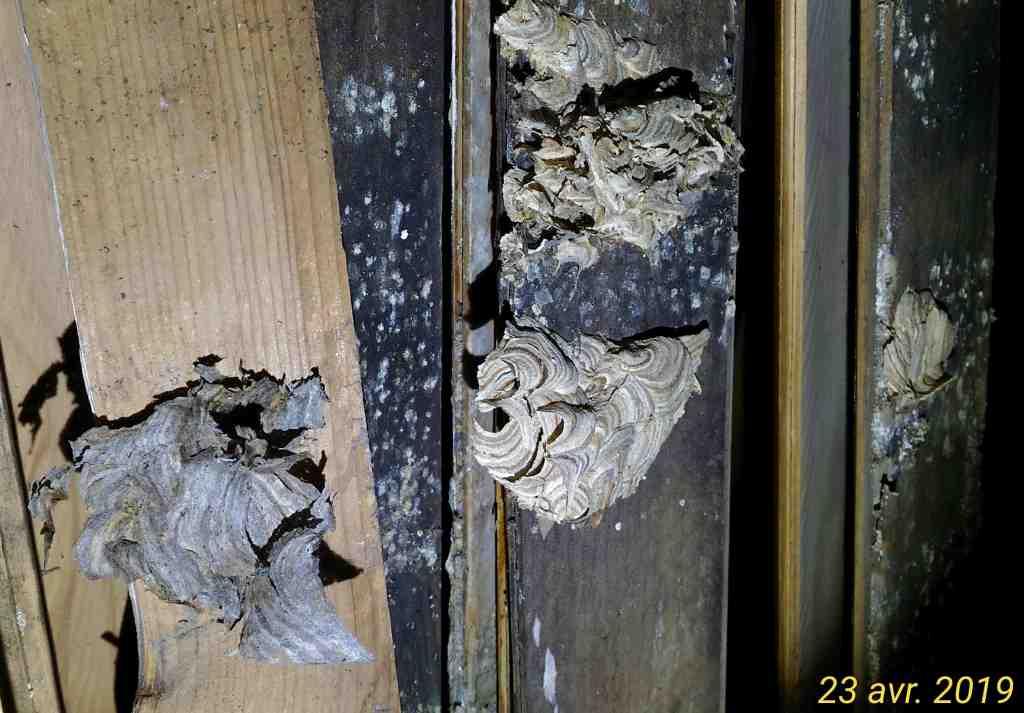 Gros dégâts sur rampant en lambris chambre à coucher _9_tra10