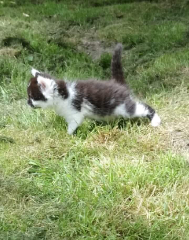 GALAXIE femelle née 15/05/2018 adoptée parrainée par Marie-Thé Img_1516