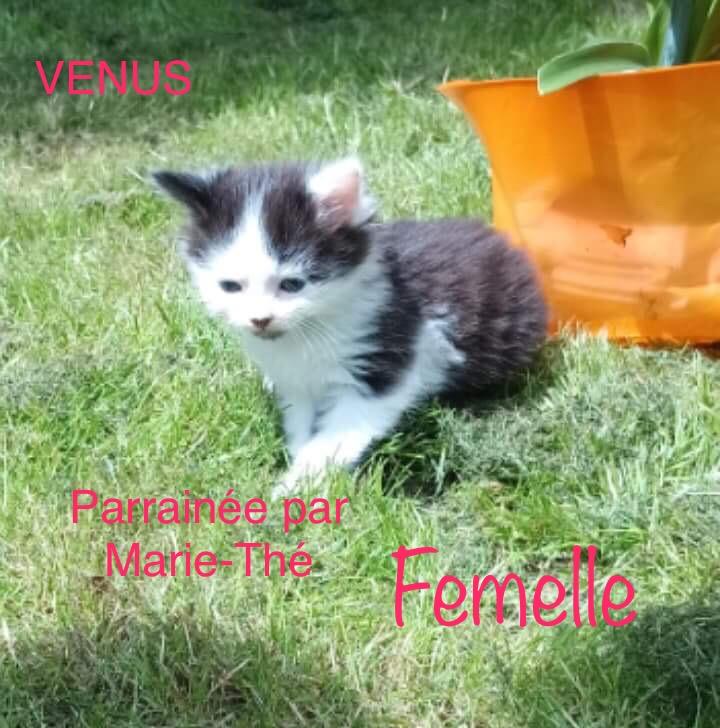 VENUS femelle née le 15/05/2018 adoptée parrainée par Marie-Thé Img_1525
