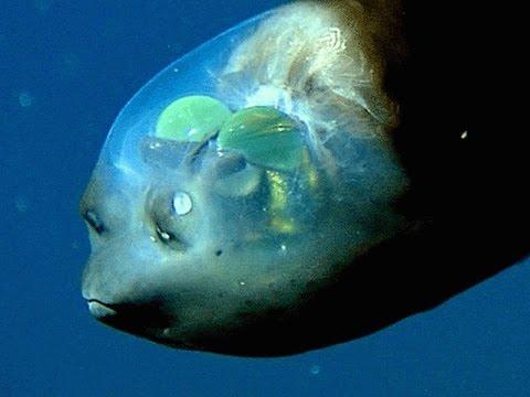 poisson marin étrange Hqdefa10