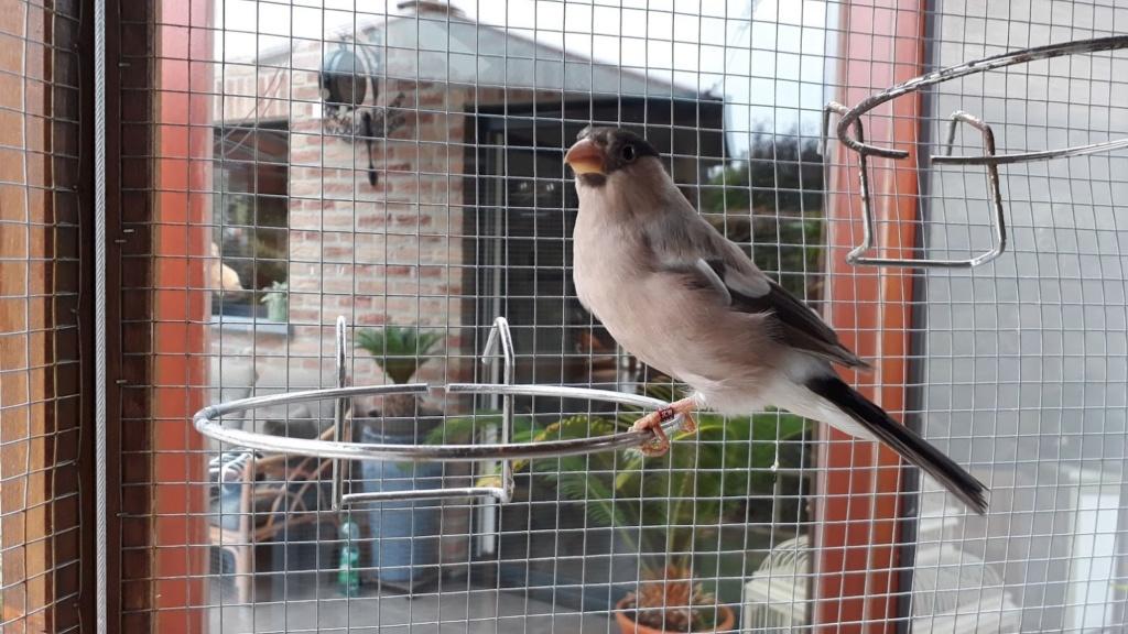 Bourse aux Oiseaux et Journée Portes Ouvertes ce Dimanche 2 Septembre de 7h00 à 18h00 20180910
