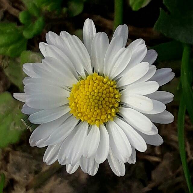 Fleur de ballade..... 20180171