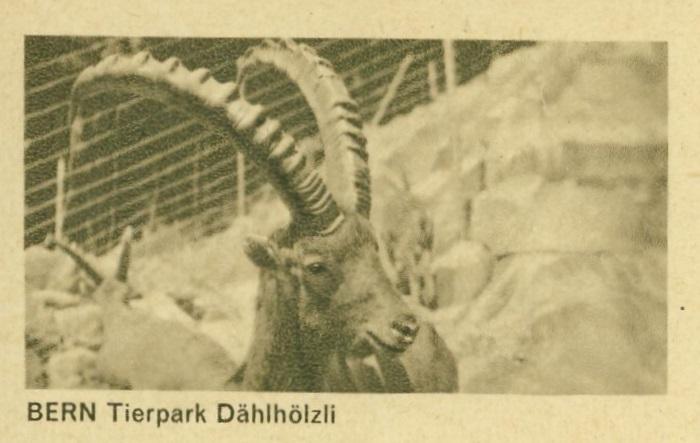 Tiere auf Bildpostkarten der Schweiz Zu_18211