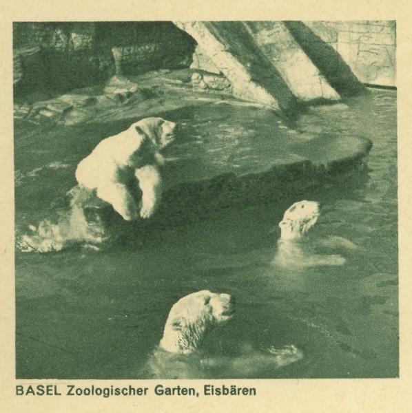 Tiere auf Bildpostkarten der Schweiz Zu_19311