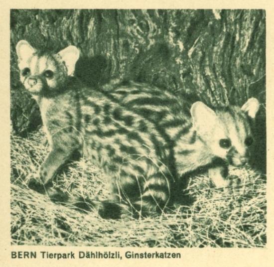 Tiere auf Bildpostkarten der Schweiz Zu_19317