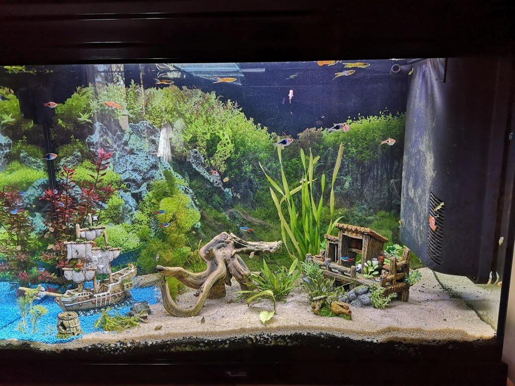 Algues filamenteuse ? Aqua211