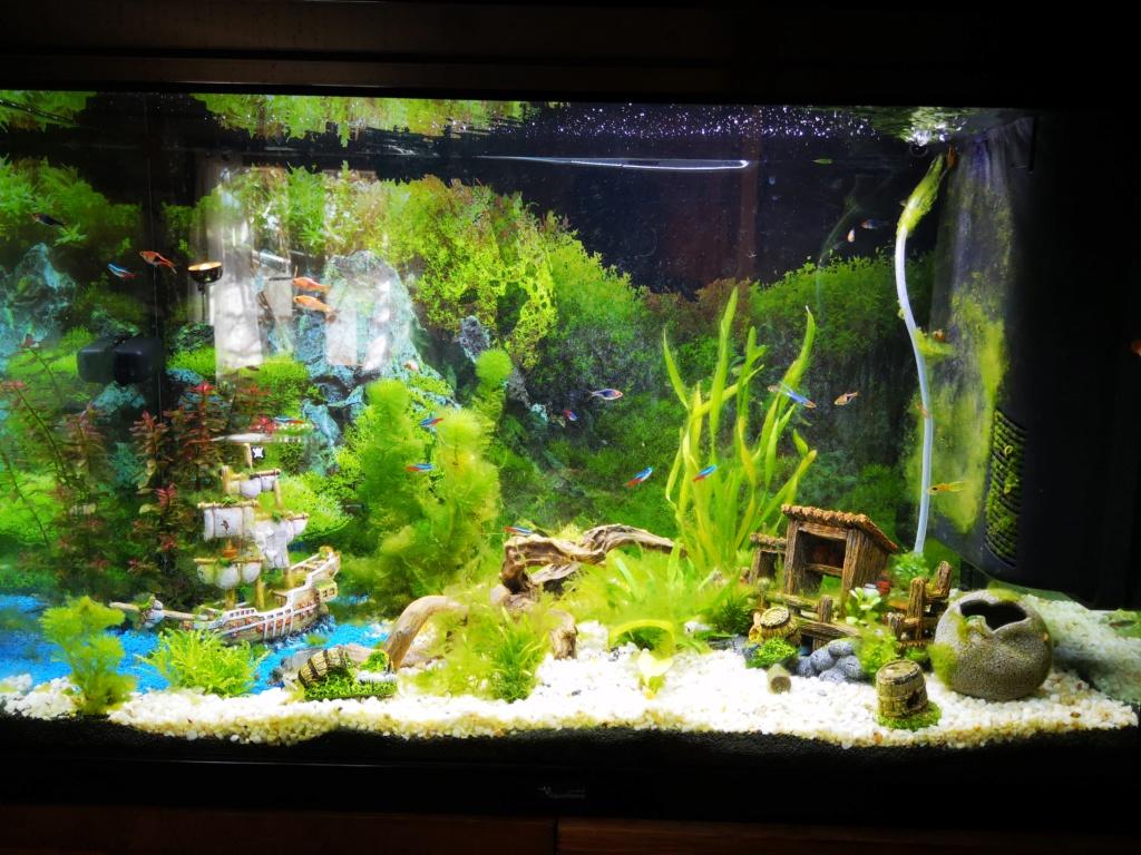 algues au démarrage Aquari10