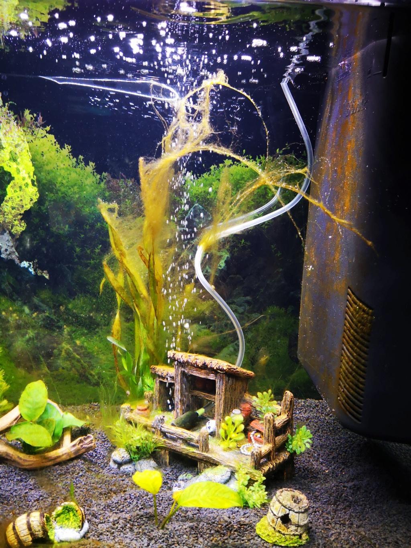 algues au démarrage Img_2010