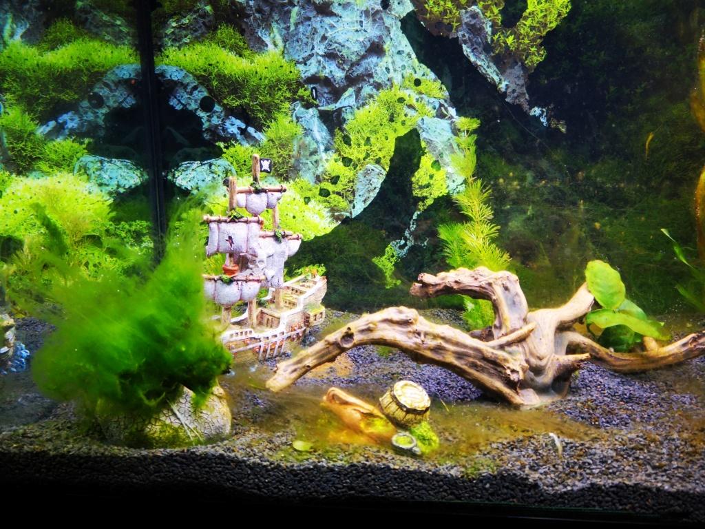 algues au démarrage Img_2011