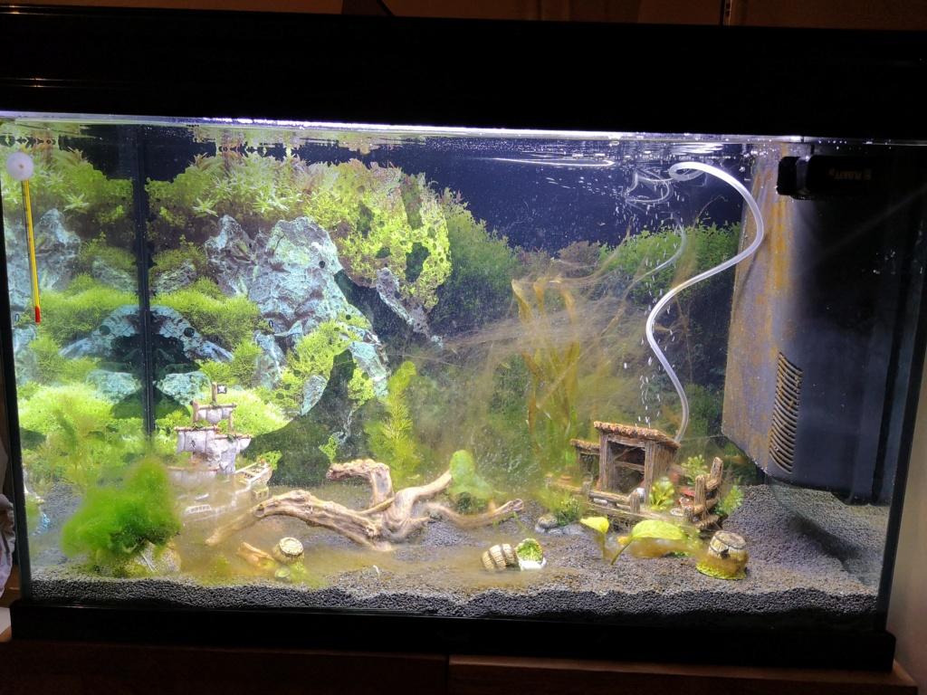algues au démarrage Img_2012