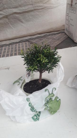 Primer bonsai 20190510