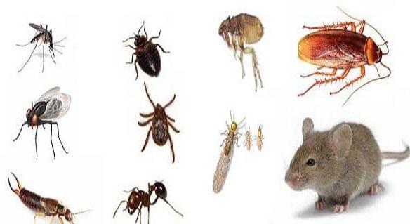 أهم خطوتين للتخلص من حشرات المنزل D8a7d911