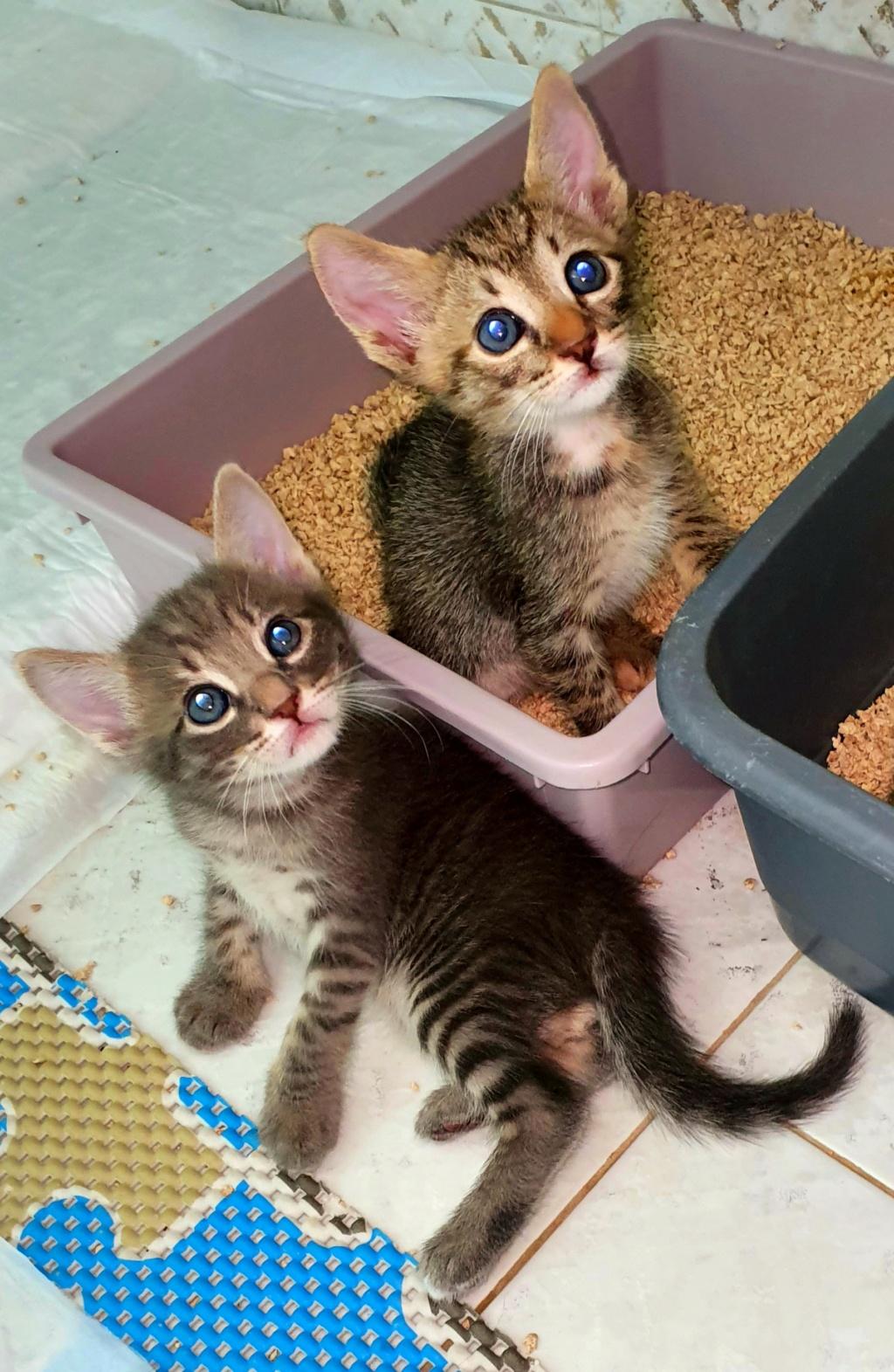 Χαρίζονται μωρά γατάκια 20210810