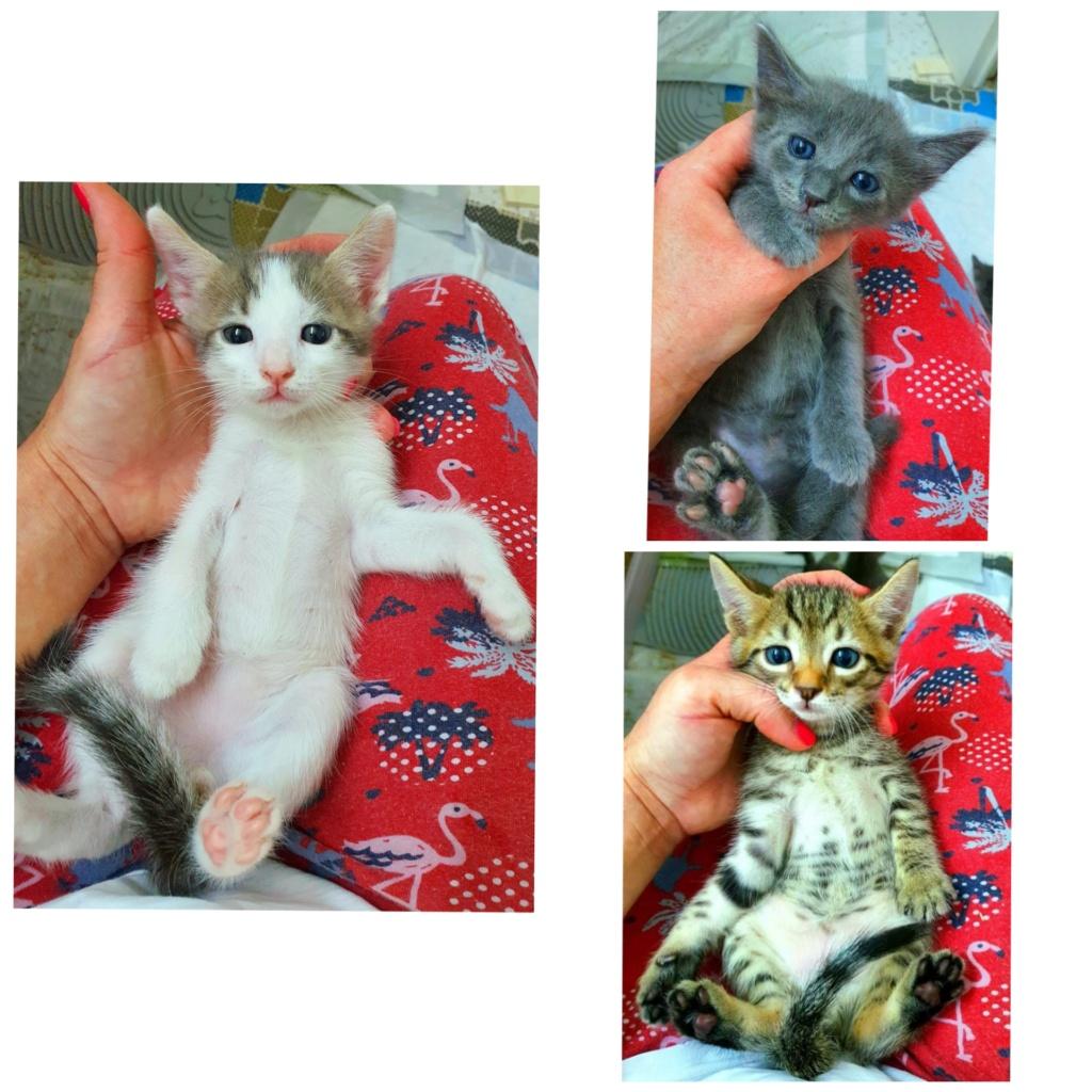 Χαρίζονται μωρά γατάκια Incoll10