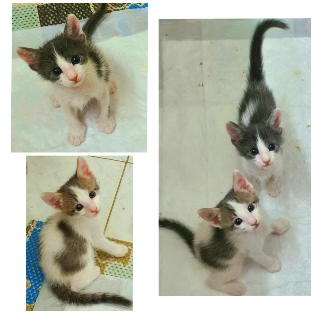 Χαρίζονται μωρά γατάκια Incoll11