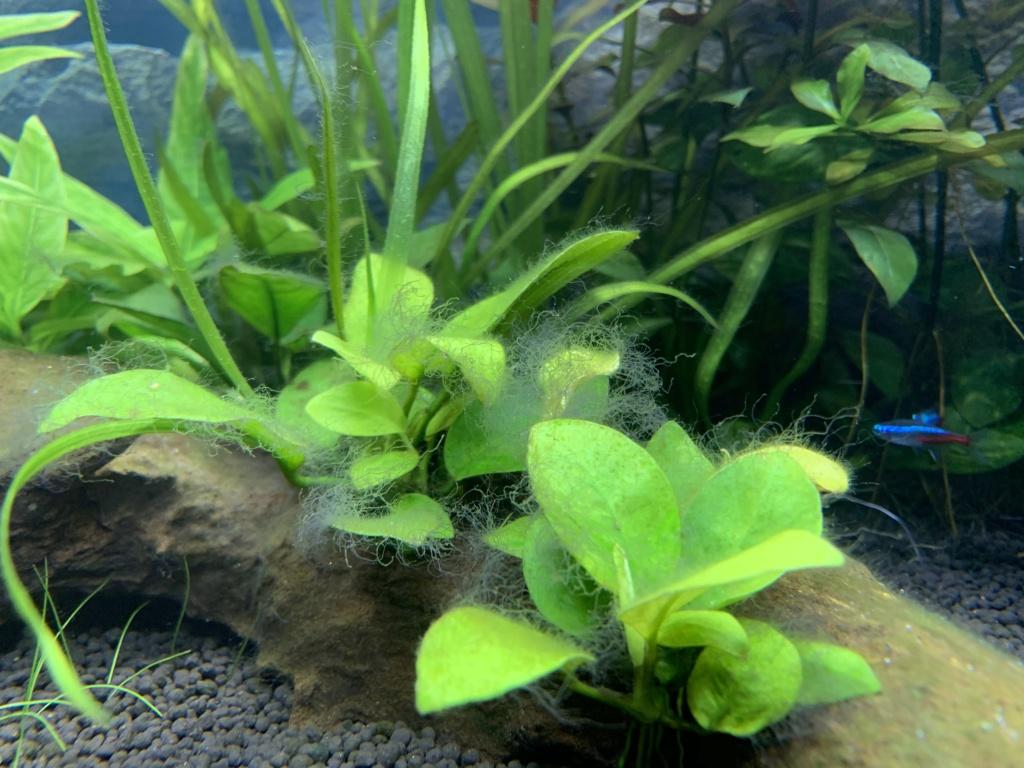 Algues Img_3910