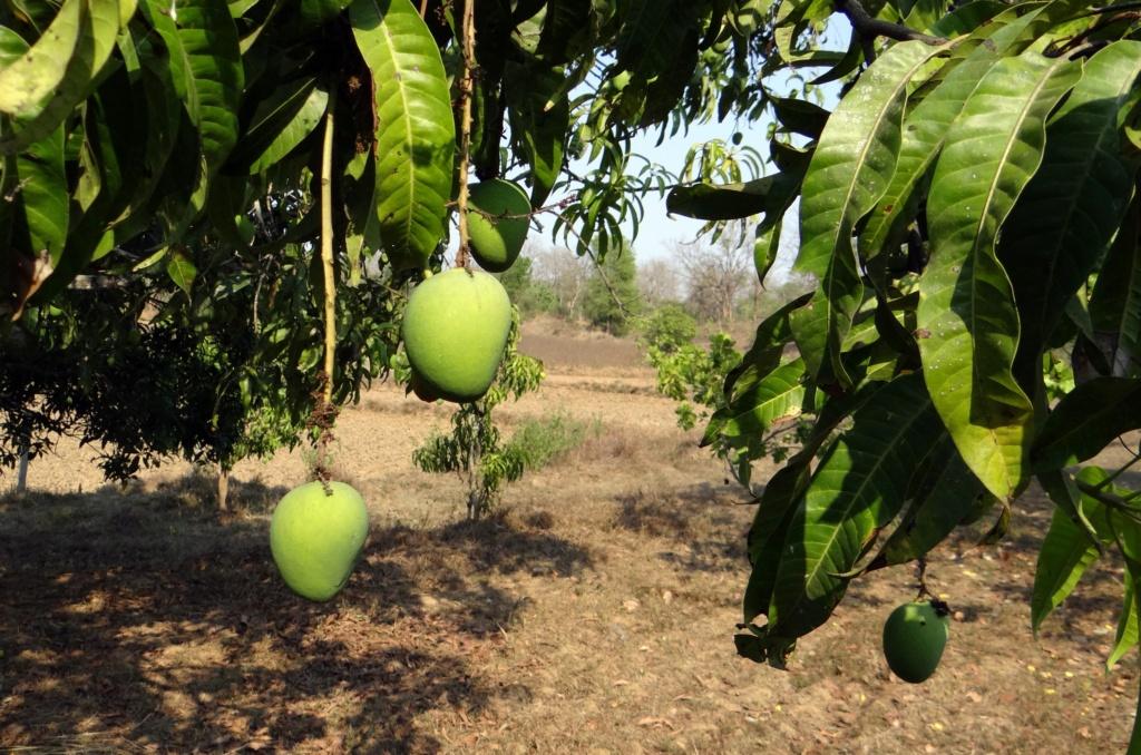 Путь пикапера Mango-10