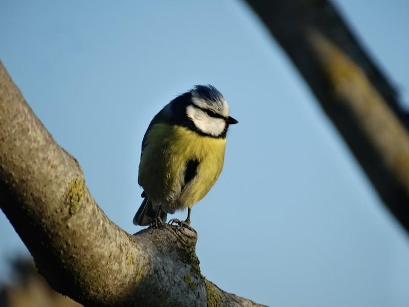 photographie d'oiseaux - Page 2 Dsc05110