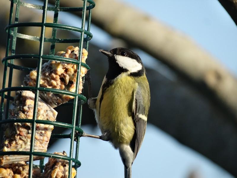 photographie d'oiseaux - Page 2 Dsc05111