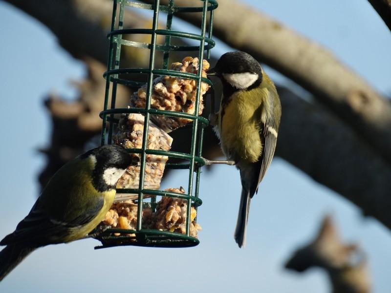 photographie d'oiseaux - Page 2 Dsc05112