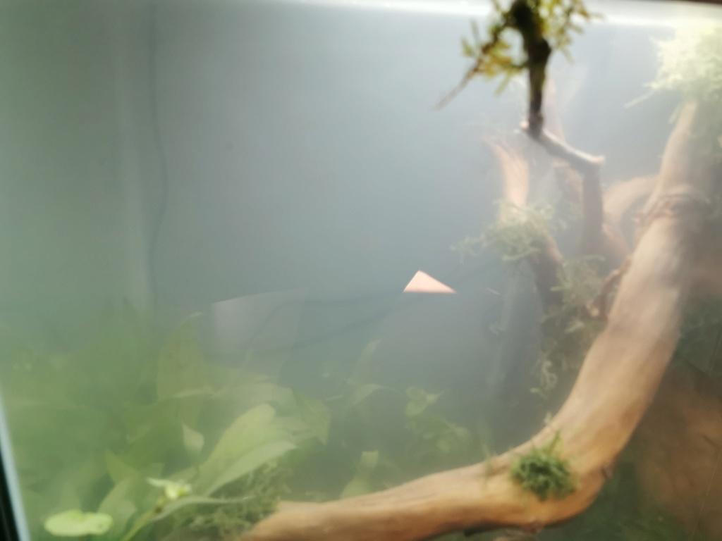 Aquarium sale Img_2010