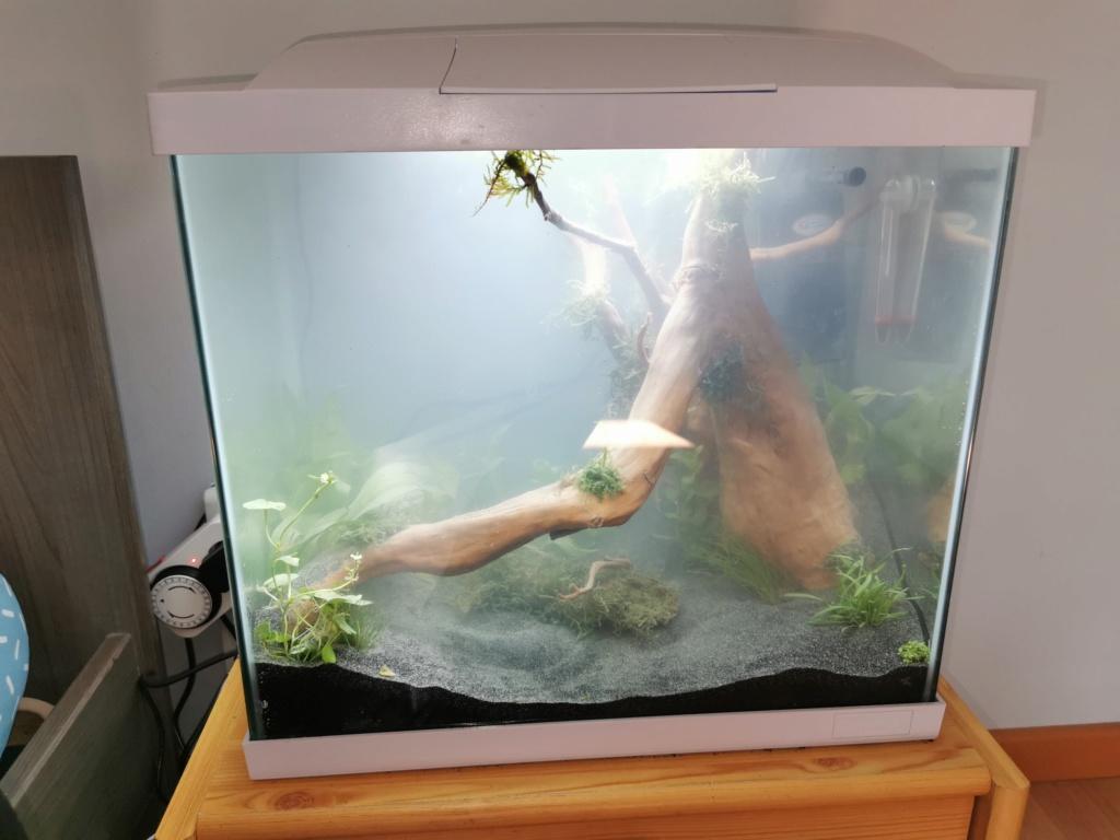 Aquarium sale Img_2011