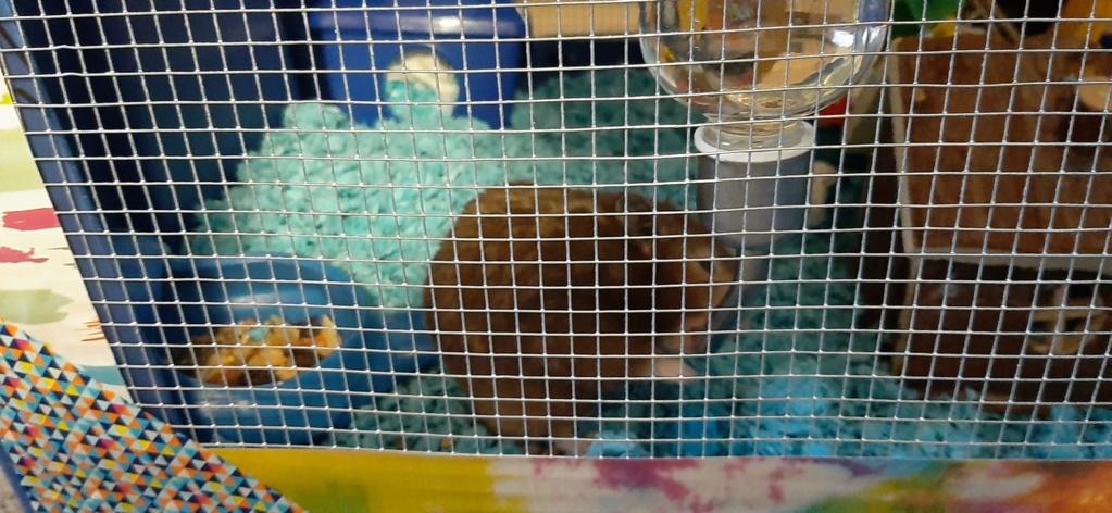 Large multilevel bin cage 20200513
