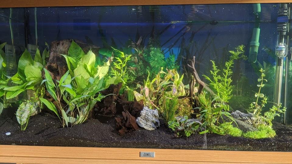 Premier Bac 180 L - Matériel inefficace et santé des plantes Img_2012