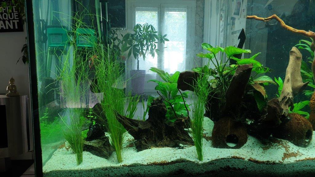 mon aquarium de 360 litres 04_10_12