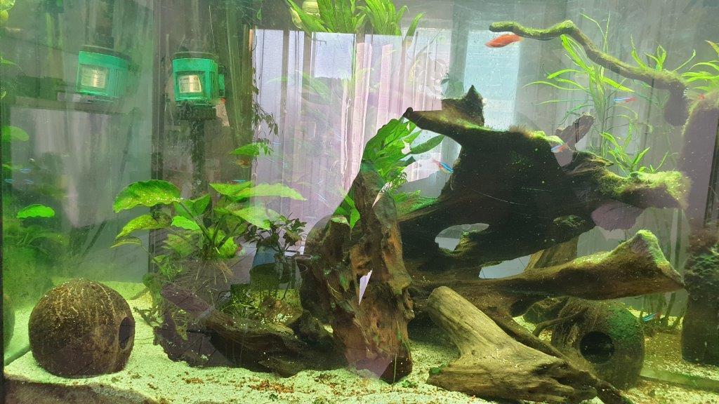 mon aquarium de 360 litres B10