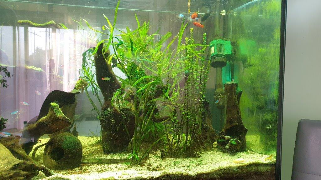 mon aquarium de 360 litres C10