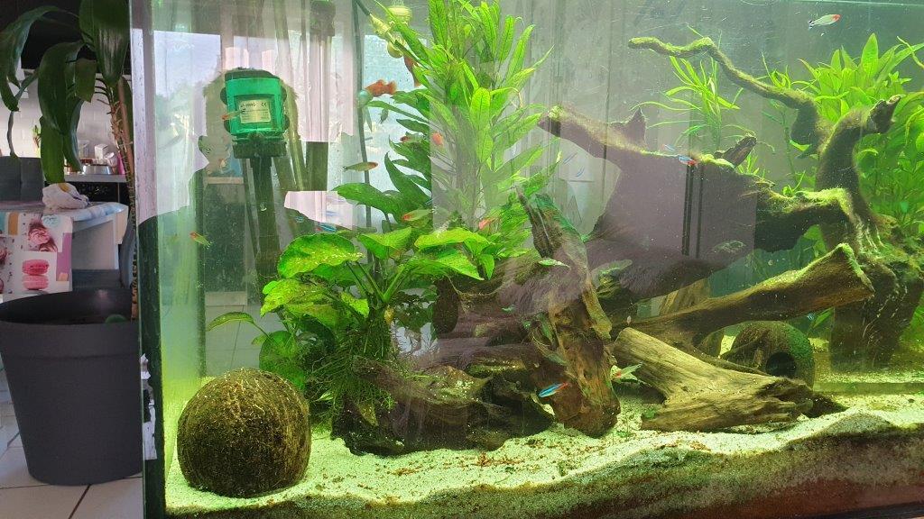 mon aquarium de 360 litres D10