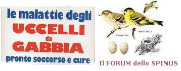 Forum dello Spinus Forum_61