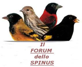 Forum dello Spinus Forum_63