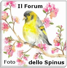 Forum dello Spinus Forum_70
