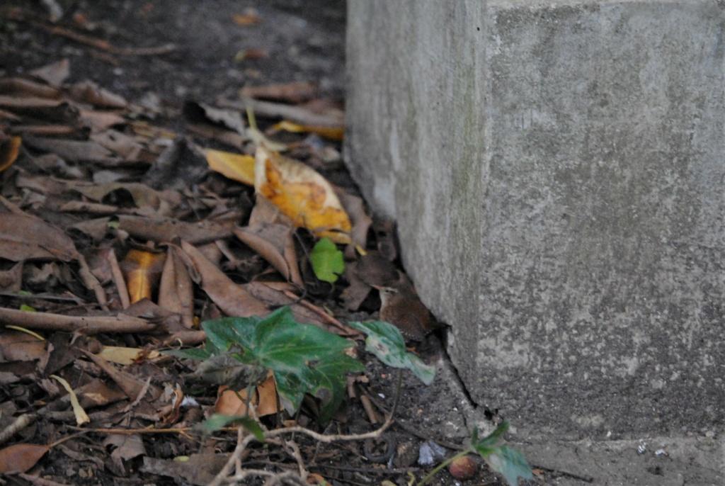 Carriça, 9/01, Jardins Gulbenkian Dsc_0015
