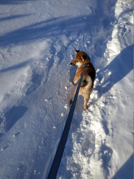 Вес щенка - Страница 13 Img_2011