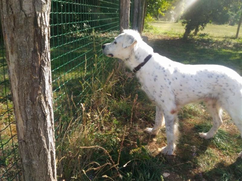 MONZON chien croisé dogue /retriever 6 ans -  Asso Orfee en pension dept 79 2010