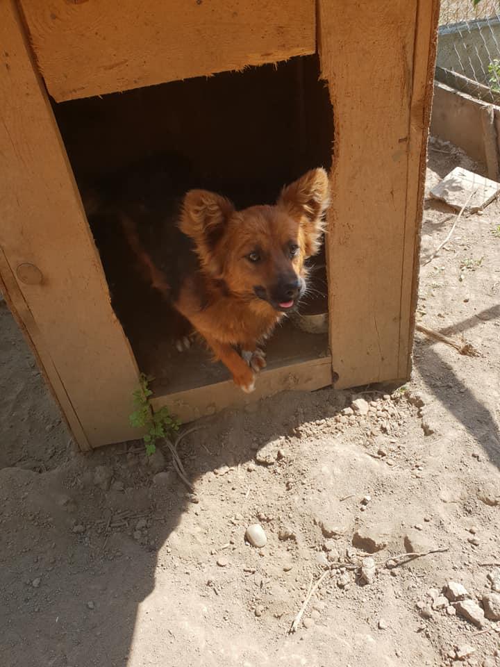 L'histoire des chiens de Roumanie? 52079910