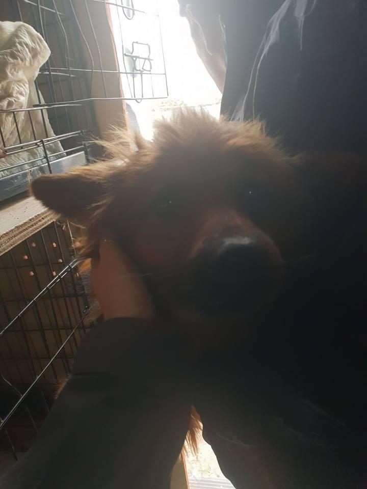 L'histoire des chiens de Roumanie? 52188110