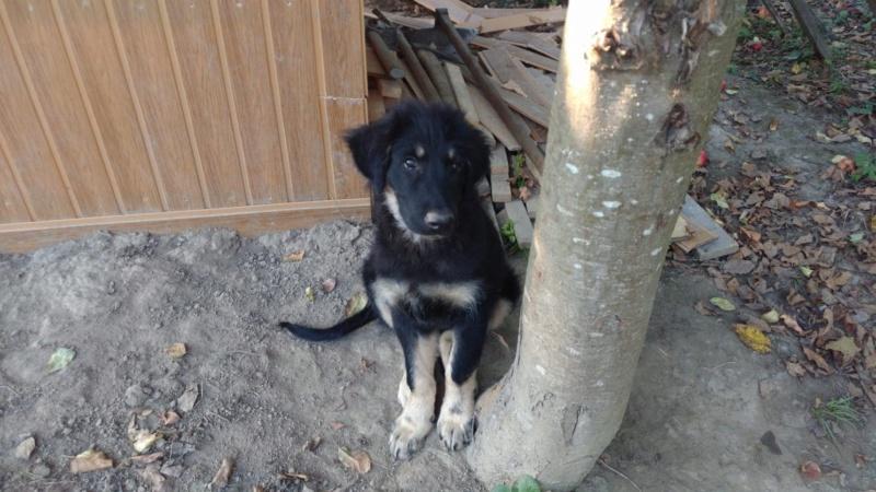 [ A RESERVER ]PALMER  4 mois  en refuge chez NICOL 68875610